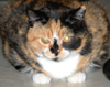 michelel72: (Cat-Daisy-Glare)