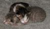 michelel72: (Cat-Kittenpile)
