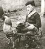 cat63: (chicken cart)