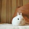 pretz: (bunny chillin)