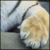 striped: (paw)
