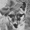 ext_134195: ([Thylacine] Stupid Hat)