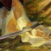 twowrens: sword & banner (book fan, contemplative)