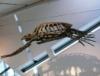 the_engineer: Turtle (Turtle)