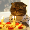 christomanci: A picture of a cat in a shirt staring forlornly at a birthday cake. ([Cat] Sad Birthday)