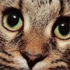 pensnest: very close up of tabby cat (Catcatcat)