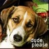 pensnest: exceptionally cool dog, caption 'dude, please' (Dude dog)