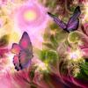 iamprana: (emergence butterfly)