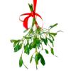 anya_elizabeth: Mistletoe. (Mistletoe)