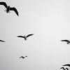 pre: birds (Default)