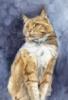 kvt: (Cat)