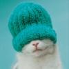 moonlettuce: (Misc: Rachael Hale Cat)