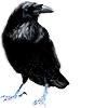 inverarity: (raven)