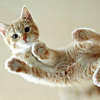 moonlettuce: (Misc: Hover Cat)
