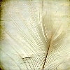 nepenthe: (Feather)