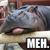 pink131980: Hippo Meh (meh)