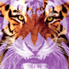 house_of_bells: a tiger's face, only real when seen through a butterfly (War Face)