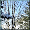 malkingrey: (Sunny Snow)