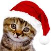 angelikitten: A kitty in a santa hat! (Seasonal - Santa Cat)