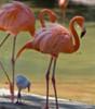 ariele: (flamingo)
