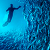 ruisseau: Underwater picture of person swimming with fish; very blue (Default)