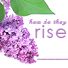 glinda: lilac bloom - see how they rise (lilac)