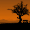ext_9366: (Tree)