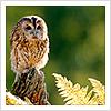 aigha: (Owl)