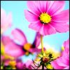 raanve: (pretty flowers)