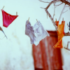 tree: underwear hanging on a line ([else] sleep does not come because)