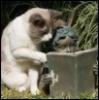 ciraarana: (reading cat)