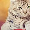 tumbleweeds: (☽ cat :: fucking really?)