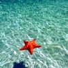 ceria: (Water and Starfish)