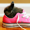prettypanic: (baby bunny in shoe)