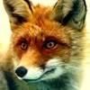 foxbox: (pic#3916837)