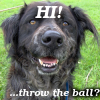 "triadruid: My mutt dog, Fractal, with the caption ""Hi!!! ... throw the ball?"" (puppy, throw the ball, Fractal)"