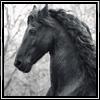 fyrdrakken: (Horse - black - head crop)