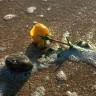 iamnotdefeated: (Rose & Rock at Half Moon Bay)