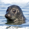ariestess: (harbor seal -- from meathiel)