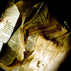 ginandkerosene: burning, water-damaged pages of a book (bring the library down with us)