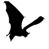 caddies: (bat country)