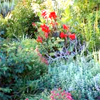 caddies: (garden)