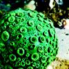 benthic: Green globe sponge (Default)