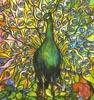 wrenstarling: A peacock (Peacock)