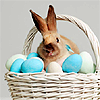 catchmyfancy: (easter eggs and bunny)