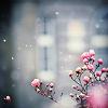 theia: (fairy snow)