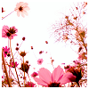 theia: (pink flowers)