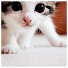 theia: (kitty!)