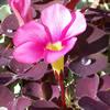 randomreader: (flower and dew drop)