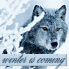 icewolf: snowy wolf (winter rose)
